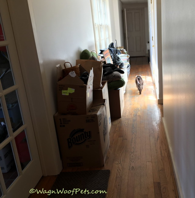 Headed back to her room! Today that hallway has about half as much stuff in it - yay!