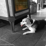 Black & White Sunday – Heat Hound