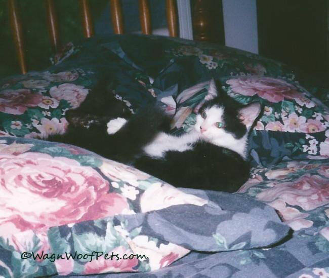 #TBT - Katie Cat