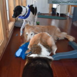 March #PetBloggerBloopers Roundup – No Cooperation