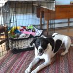 DIY Positive Pet Training – Luke's New Trick