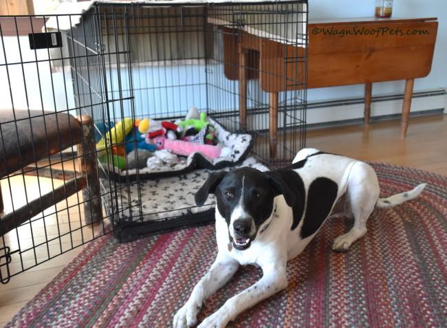 DIY Positive Pet Training - Luke's New Trick