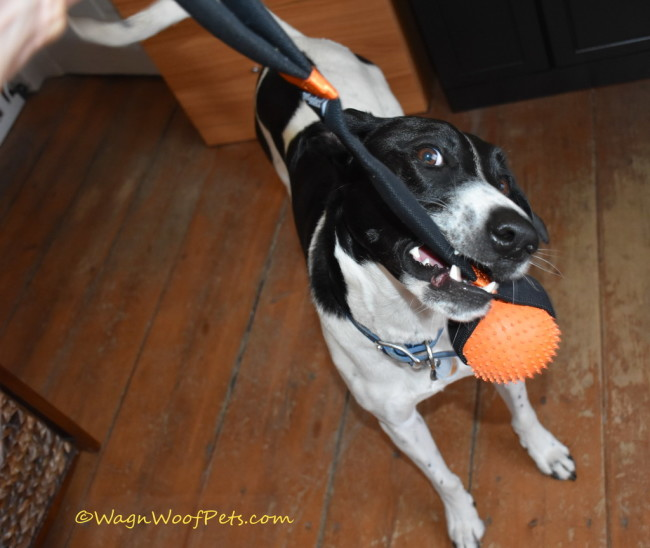 Luke Loves Toys from April Pet Treater