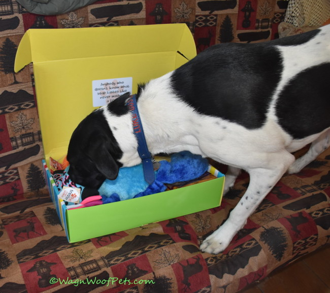 Luke & the Momz Clean Up with April Pet Treater