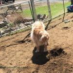 Luke the Excavator