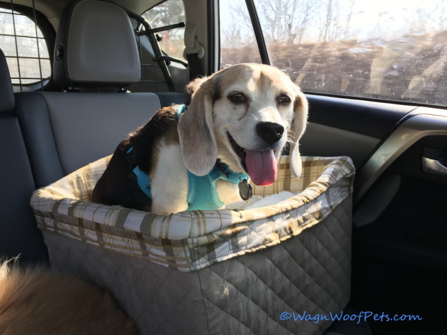 Safety, Style & Comfort - Solvit pet Safety Seat (& Giveaway!)