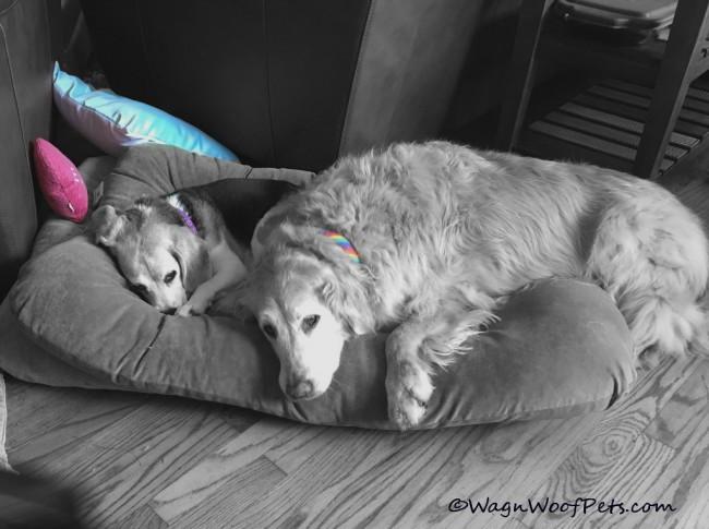 Sweet Sisters on Black & White Sunday