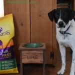 Growing Into a Healthy Dog #GrainFreeForMe