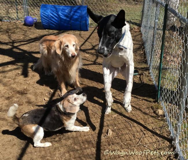 #GrainFreeForMe - Growing Into a Healthy Dog