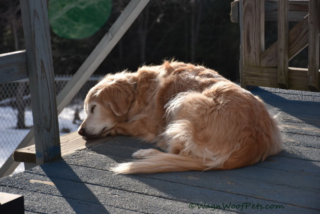 Fighting K9 Cancer Through Healthy Living (Part 4) - Immune System Boosters & Supplements