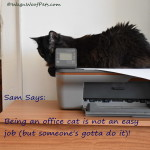 Office Cat