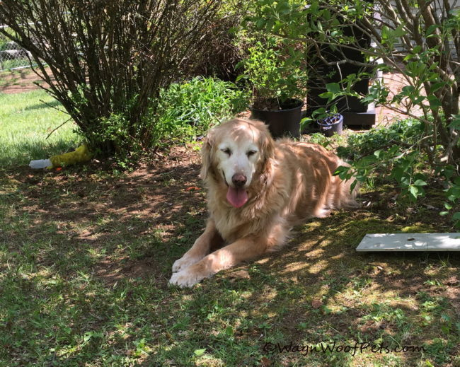 Fighting K9 Cancer Through Healthy Living (Part 5) - Preventing Cancer