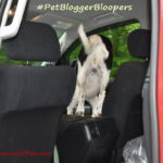 June #PetBloggerBloopers Roundup