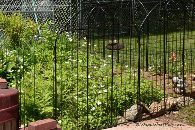 Challenges of Gardening with Dogs - Part 1
