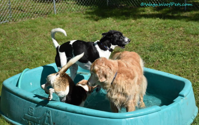 A Party in a Box from Pet Treater