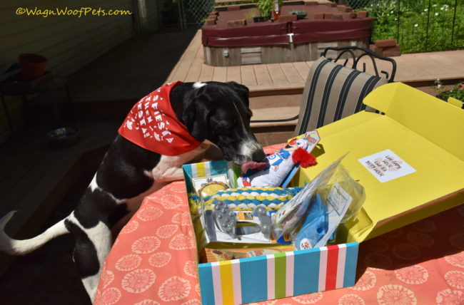 It's a Party in a Box! Pet Treater