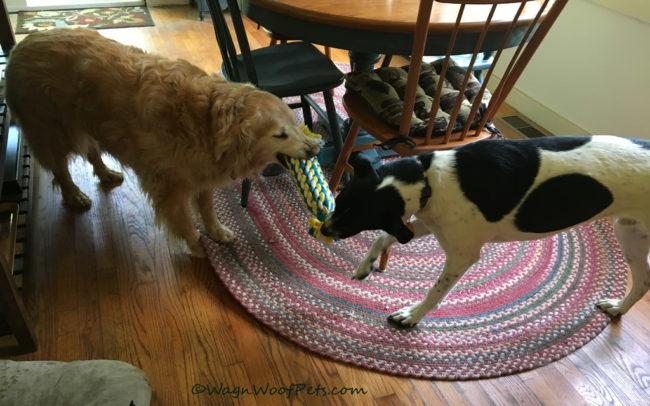 Pet Treater May Box - Party Fun!