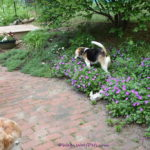 The Challenges of Gardening with Dogs – Are Your Plants Safe? Part 1