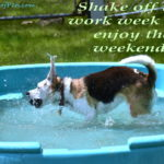 Shake It Off Sunday
