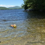Scouting for Sheba's First Swim of the Summer