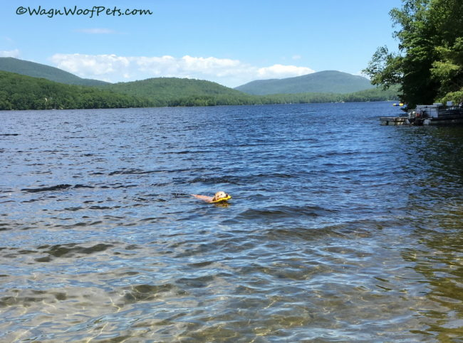 Scouting for Sheba's First Swim