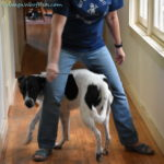 June Positive Pet Training – What's Your Dog Training Plan?