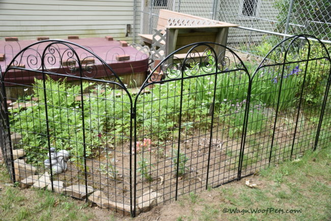 The Challenges of Gardening with Dogs - Part III