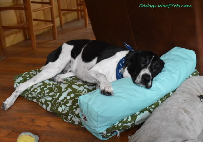 Molly Mutt Beds Review & Giveaway
