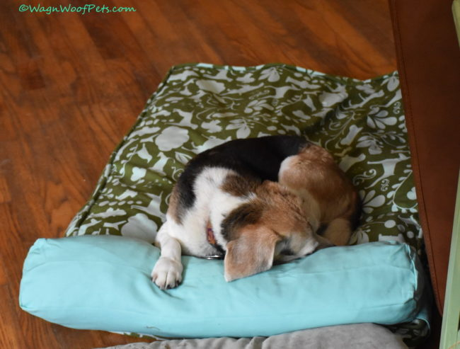 Molly Mutt Beds are not Just for Mutts!