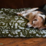 Not Just for Mutts! Molly Mutt Dog Bed Review