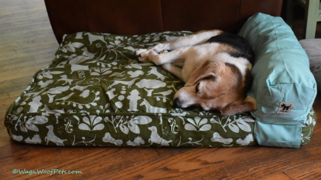 Not Just for Mutts! Molly Mutt Bed Review & Giveaway