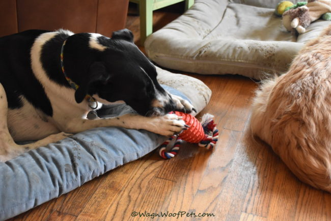 July Pet Treater Toy