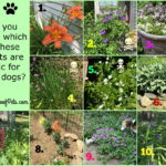 The Challenges of Gardening with Dogs – Are Your Plants Safe? Part III – Quiz Answers