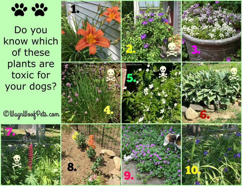 The Challenges of Gardening with Dogs - Are Your Plants Safe? Part III - Quiz Answers