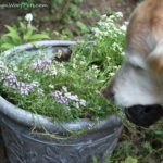 The Challenges of Gardening with Dogs – Are Your Plants Safe? Part 5