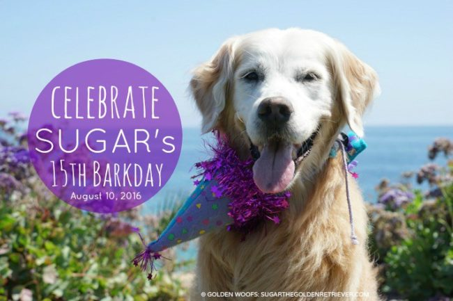 Sugar's 15th Barkday