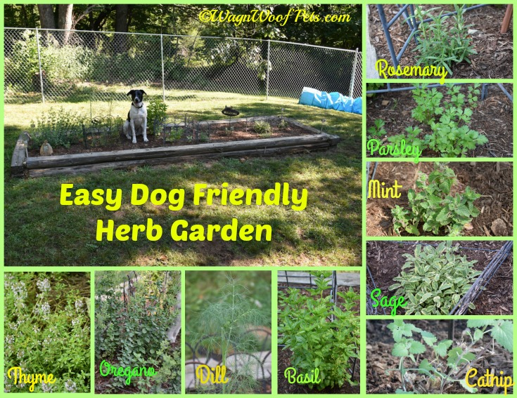 The Challenges of Gardening with Dogs - Are Your Plants Safe? - Herbs