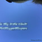 The Sky's the Limit! #PetBloggerBloopers