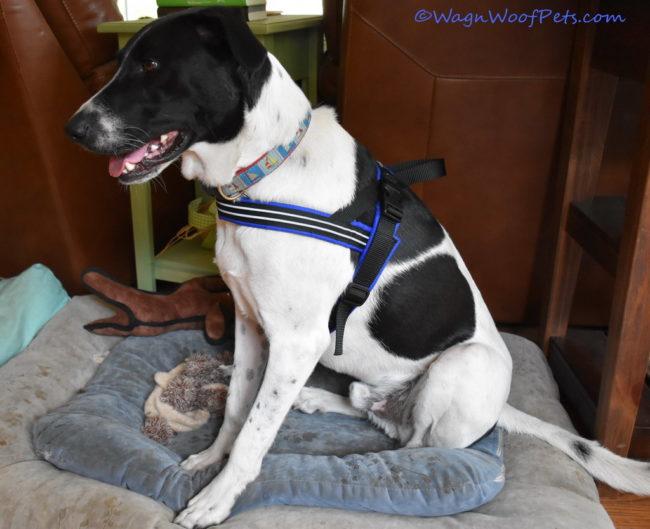 Positive Pet Training - Nose Works!