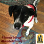 Shining a Light on Orphan Pets #RememberMeThursday