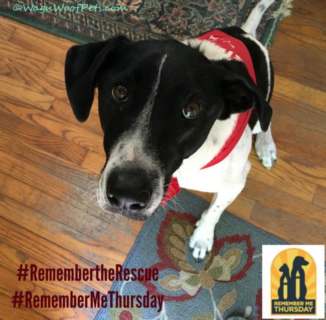 Shining a Light on Orphan Pets #RememberMeThursday