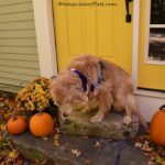 #PetBloggerBloopers – Modeling Challenges