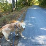 Get Out & Walk! Sheba's Life Tip #8