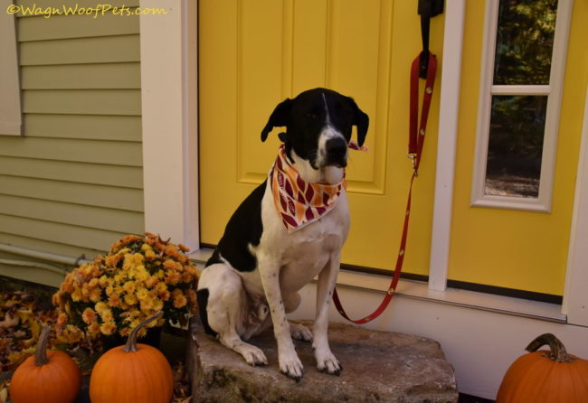 Want the Best Dressed Dog in Town? Dog's Best Trend Review