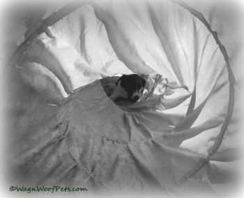 Black & White Sunday - Hiding