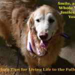 Sheba's Tips for Living Life to the Fullest – Tip #9