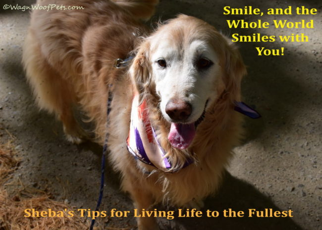 Sheba's Tips for Living Life to the Fullest - Tip #9