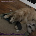 Lazy Photographer #PetBloggerBloopers
