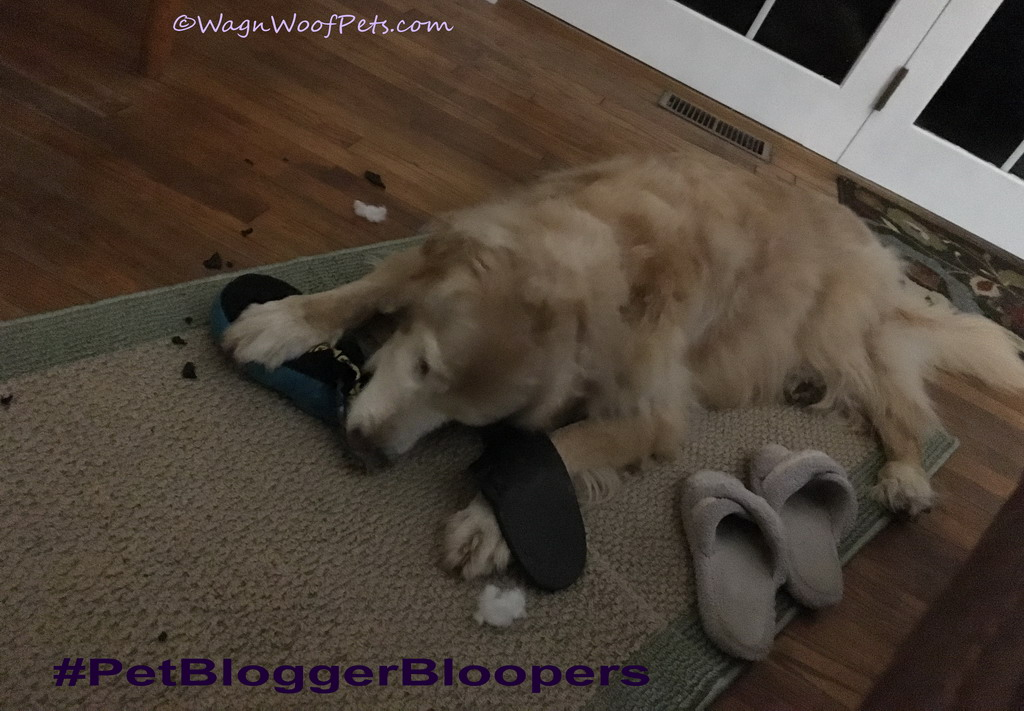 Lazy Photographer - #PetBloggerBloopers