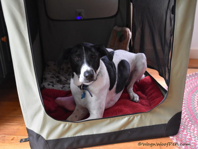 Positive Pet Training - Planning for Indoor Activities
